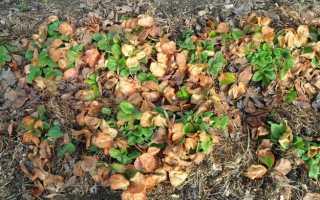 Уход за клубникой весной: советы бывалых садоводов