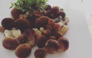 Солянка с маслятами: простые рецепты на зиму «пальчики оближешь»