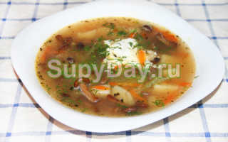 Суп из свежих опят: рецепты с фото, как вкусно приготовить