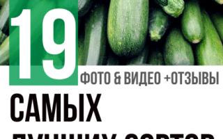 Сорта зеленых кабачков с фото: темно-зеленые, полосатые, длинные, большие