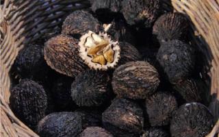 Черный орех от паразитов: как принимать настойку, отзывы