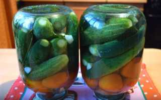 Рецепты ассорти из огурцов, помидоров и кабачков на зиму: как мариновать, без хрена, консервирование