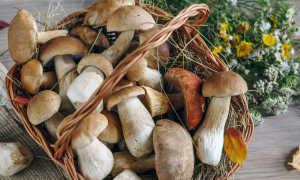 Белые грибы: как сохранить на сутки, три дня, неделю и на зиму, срок годности, способы хранения