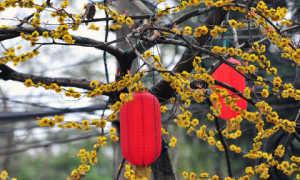 Лепиота гребенчатая (Зонтик гребенчатый): съедобность, как отличить, как выглядит, где растет