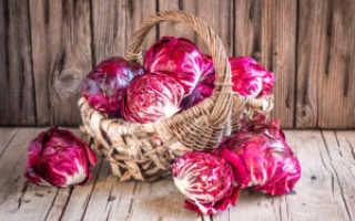 Краснокочанная капуста: польза и вред, химический состав, противопоказания, употребление