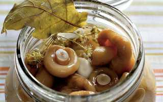 Грузди, маринованные на зиму: рецепты приготовления горячим способом в домашних условиях, в банках, с уксусом, фото, видео