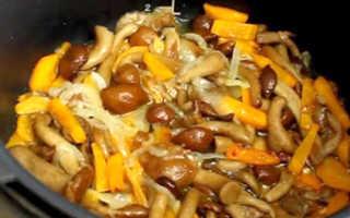 Рецепты опят в мультиварке: как вкусно приготовить свежие и замороженные грибы