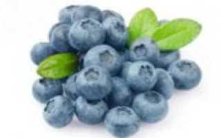 Как заморозить голубику на зиму в холодильнике (морозилке): полезные свойства, калорийность замороженных ягод