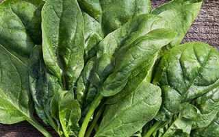 Шпинат Матадор: выращивание из семян, уход, отзывы, фото