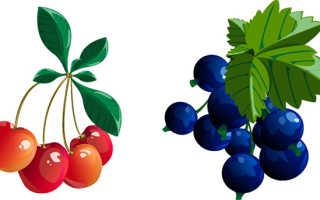 Компот из вишни и красной (черной) смородины: простые рецепты с фото