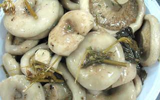 Маринованные белые грузди на зиму: рецепты приготовления маринада, в банках, горячим способом
