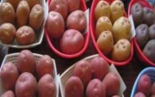 Лучшие сорта картофеля для Подмосковья: описание + фото, отзывы