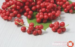 Ягоды лимонника: польза и вред, как приготовить, противопоказания