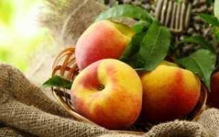Наливка из персиков: простые рецепты на водке, без водки, на спирту
