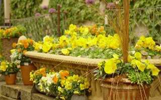 Желтые цветы-многолетники: фото и названия
