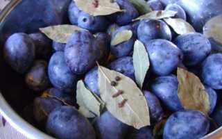 Маринованные сливы на зиму: золотые рецепты, с чесноком, с помидорами, закусочная, без стерилизации, как «оливки»