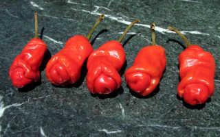 Редкие и необычные семена перца
