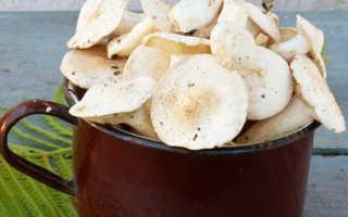 Грибы рядовки: как солить горячим и холодным способом, вкусные рецепты