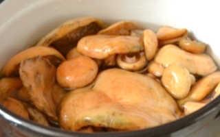 Рыжики маринованные: рецепты без стерилизации на зиму
