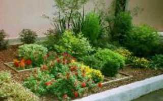 Скорлупа кедрового ореха: использование в народной медицине, садоводстве