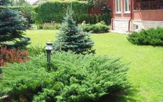 Удобрение для хвойных растений: чем подкормить весной и осенью