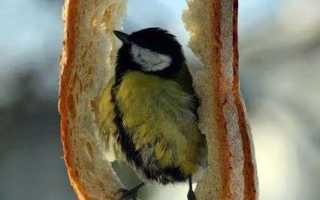 Чем накормить птиц зимой: советы + виды птиц, что подкармливаются