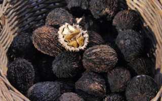 Черный орех: полезные свойства и противопоказания, описание, применение