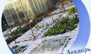 Календарь огородника и садовода на декабрь 2020 года