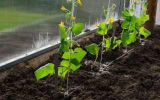 Почва для огурцов в теплице