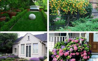 Кустарники декоративные: выращивание и использование в дизайне