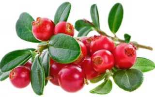 Брусника сушеная: полезные свойства, калорийность, применение, как сушить в сушилке