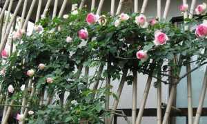 Опора для плетистой розы своими руками + фото
