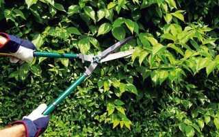 Обрезка барбариса весной, летом: как правильно обрезать, как формировать