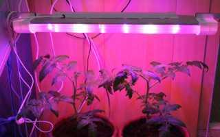 Лампы для рассады: как выбрать, какие лучше