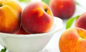Чем и когда опрыскивать персик весной: болезни листьев, плодов, ствола персика, фото