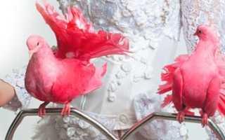 Розовый голубь: описание, ареал, образ жизни, фото
