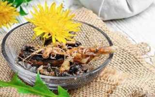 Корень одуванчика: полезные свойства для организма, применение в народной медицине, от чего помогает, как заваривать, как пить