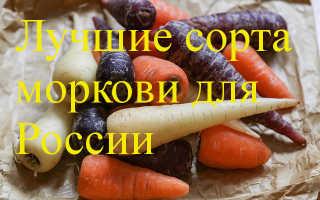 Районированные сорта моркови