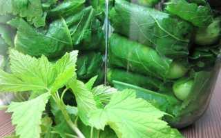 Огурцы в листьях хрена: рецепты на зиму
