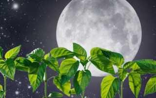 Лунный (посевной) календарь огородника на апрель 2020 года: посадка растений