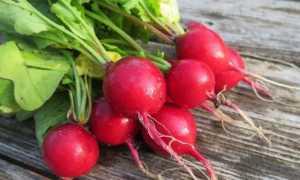Редис: польза и вред для организма человека, калорийность, гликемический индекс, витамины, полезные свойства корнеплодов, ботвы