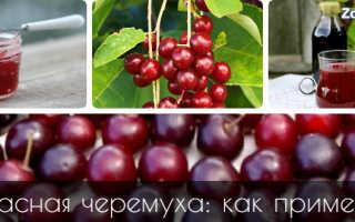 Красная черемуха: полезные свойства и противопоказания для здоровья человека