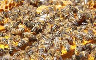 Бизнес-план: пасека, разведение пчел