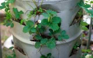 Клубника в бочке: выращивание и уход + отзывы