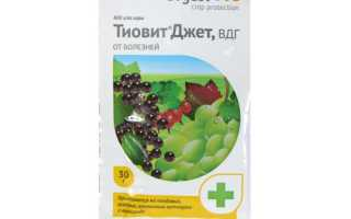 Препарат Тиовит Джет: инструкция по применению для винограда, клубники, роз, огурцов