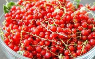 Протертая смородина без сахара: черная, красная, рецепт приготовления