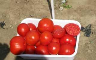 Суперранние томаты для теплиц