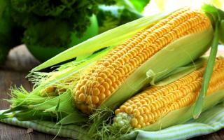Когда и как сажать кукурузу на рассаду