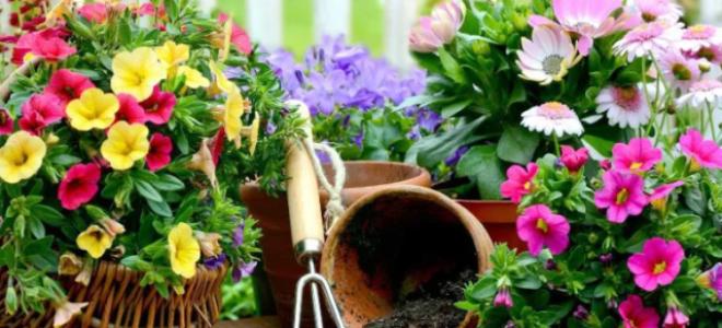 Календарь цветовода на май 2020 года: комнатные, садовые цветы