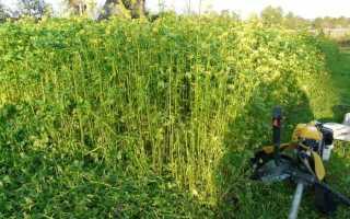 Чем засеять огород, чтобы не росли сорняки